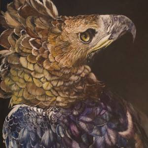 """Relict Reign - African Crowned Eagle ; #6 of 60 in my """"Eagles of the World"""" series ; Watercolor on Scratchboard by Justin Dancing Hawk."""