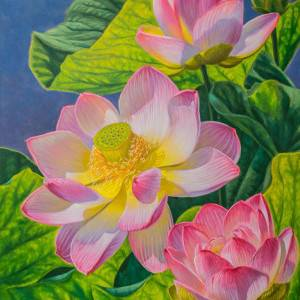 Pink Lotuses by Fiona Craig. Oil Painting showing Plants.